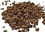 Semillas de Cilantro - SPICESontheWEB (50g)