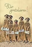 DeCoArt...... XL-Karte Riesenkarte Geburtstag Erdmännchen Wir gratulieren ... ca. 22x31 cm mit Umschlag