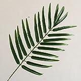HZF-Unico lasciava in foglie di girasole, ventola simulato foglie, foglie di palma, foglie di banano, ventola foglie, foglie di palma, imitazione lascia ,Fiori artificiali