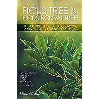 Ficus Tree and Ficus Bonsai Tree. The