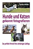 Hunde und Katzen gekonnt fotografieren - Das perfekte Portrait Ihres vierbeinige