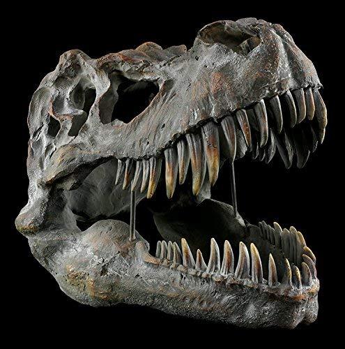 Tyrannosaurus Rex Totenkopf - groß - Deko Figur Wandrelief