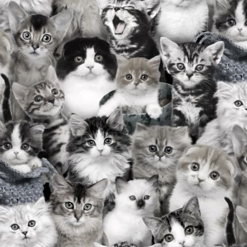 fat-quarter-cat-breeds-in-grey-black-and-white-100-cotton-quilting-fabric