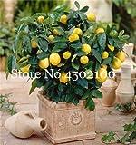 AGROBITS Promoción! 50 Pcs Balcón Patio árboles de frutas kumquat Bonsai Garden naranja mandarina Flores enano Cítricos Juicy Orange Tree Fruit: 5