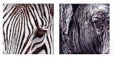 2 er Set Wandbilder Afrika Motive Augen Elefant Zebra je 60 cm x 60 cm