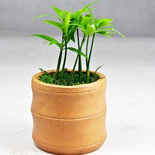 cinese-pentole-stile-bonsai-bambu-semi-alberi-sempreverdi-semi-scrivanie-mini-piante-in-vaso-verdi-5