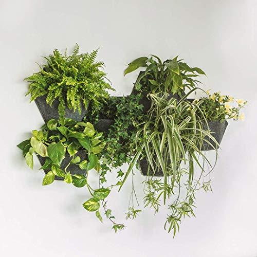 Jardín Vertical con autoriego para Interior o Exterior. Terrazas, Cocinas, Baños, Salones. Instalación Sencilla en 5` y fácil de Mantener. CREA tu Muro Verde Vegetal