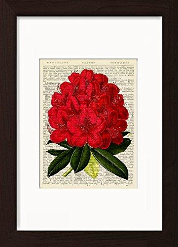 rhododendron-flower-botanical-print