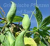 SONIRY Samen-Paket: Inka Gurke für Outdoor-Kürbis 5 Samen Sehr selten