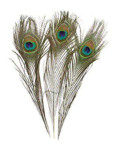Pfau Kostüm Erstellen Ein - Romote 50pcs schöne natürliche Pfau-Endstück-Federn über 10-12inch für DIY Dekoration