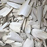 #7: Matsyavillah Cuttle Fish Bone