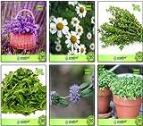 Pinkdose erbe piantare i semi di lavanda, camomilla tedesca, Timo inglese invernali, rucola selvatica, Penny Royal, Crescione comune dell'erba Seeds Combo Pack By Pinkdose Seed