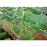 YUVAGREEN Agro Garden Netting Green House Creeper Plant Support Net, 10 Feet X 5 Feet (3 Mtrs X 1.5 Mtrs, Black) Set of 1