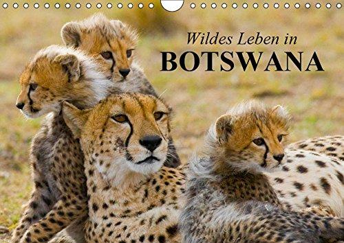 Wildes Leben in Botswana (Wandkalender 2019 DIN A4 quer): Im Reich der...