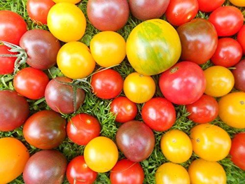 -Tomaten Sortiment 2 - 12 zuckersüße Tomatensorten im Set ***120 Samen***