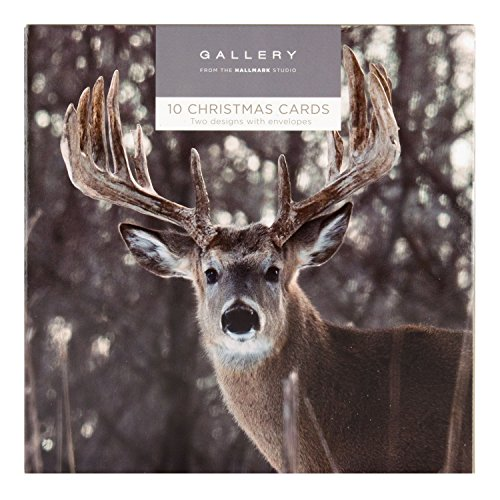 Hallmark Gallery Christmas Card Pack Reindeer and Robin - 10 Cards, 2 Designs