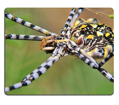 luxlady Gaming Mousepad Bild-ID: 27429774Golden Orb Web Weaver Spider Hintergrund und Baby das Arachnid Animal Hintergrund aus Afrika (Spider Baby)