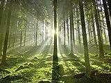 Artland Qualitätsbilder I Wandtattoo Wandsticker Wandaufkleber Hubert Körner Wald im Gegenlicht Landschaften Wald Fotografie Grün A6GJ