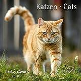 Katzen Cats 2018 - Broschürenkalender - Wandkalender - mit herausnehmbarem Poster - Format 30 x 30 cm