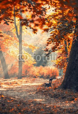toile-40-x-60-cm-autumn-city-park-with-sunbeams-toile