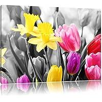 belle narcisi con i tulipani nero / bianco Formato: 120x80 su tela, enorme XXL Immagini completamente Pagina con la barella, stampa d'arte su murale con la struttura, più economico di pittura o pittura ad olio, nessun manifesto o poster - Bella Narciso