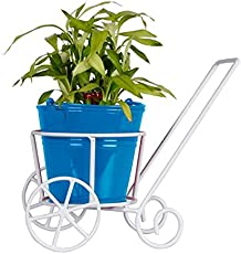 Trustbasket Trolly with Blue Bucket Planter and Lucky Bamboo Plant