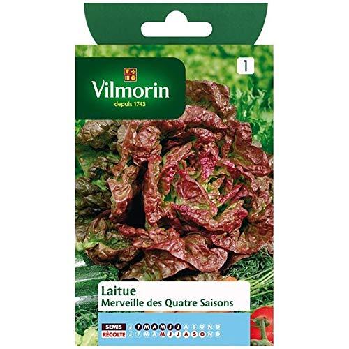 Vilmorin - Sachet graines Laitue Merveille des quatre saisons