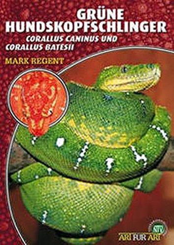 Grüne Hundskopfschlinger: Corallus caninus und Corallus batesii (Art für Art)
