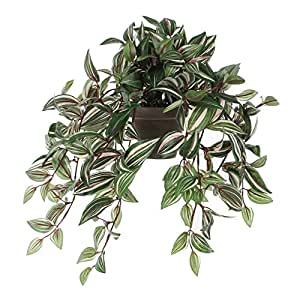 Mica decorations 976674 Tradescantia Haengend L45B25H25 gruen in Topf Stan D11.5 grau Kunstpflanze, Polyester, 45 x 25 x 52 cm