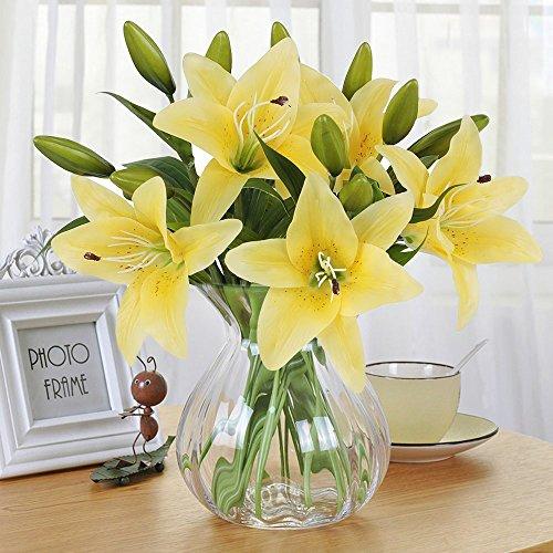 Orchidee In Vase Im Vergleich Jan 2019 Neu