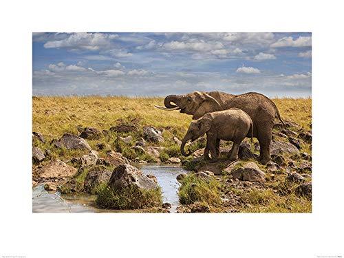 El Arte Grupo Mario Moreno (Elefantes de Masai Mara)–Póster (60x 80cm, Papel,,...