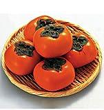 KINGDUO 30 STK/Pack Khaki Baum Samen Diospyros Kaki Frucht Samen Haus Garten Bonsai Pflanzen