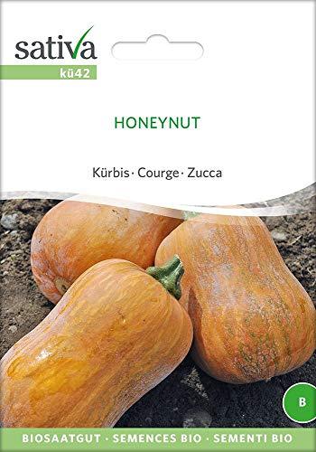 Sativa Rheinau kü42 Kürbis Honeynut (Bio-Kürbissamen)