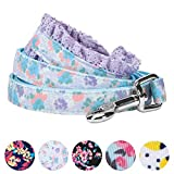 Blueberry Pet Langlebige Feder Duft Inspiriert Floral Hund Leine, Passendes Halsband und Hundegeschirr Separat erhältlich, 5' * 5/8