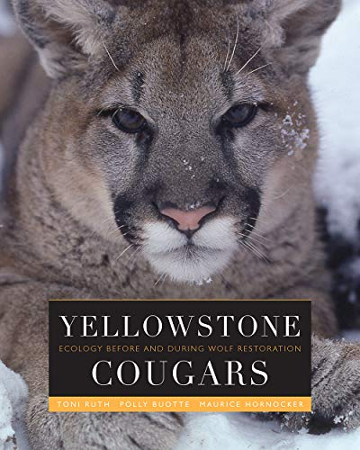 58bbcc39af609 Yellowstone Cougars: Ecology Before and During Wolf Restoration