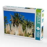 CALVENDO Puzzle Cortaderia selloana (Pampasgras) 1000 Teile Lege-Größe 64 x 48 cm Foto-Puzzle Bild von Bernd Zillich