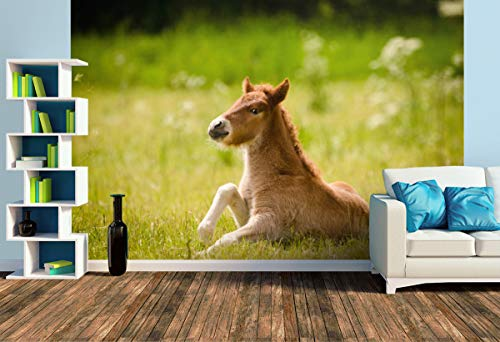 Premium Foto-Tapete Kleines Fohlen stemmt richtet sich auf (versch. Größen) (Size L | 372 x 248 cm) Design-Tapete, Wand-Tapete, Wand-Dekoration, Photo-Tapete, Markenqualität von ERFURT