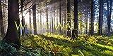 Wilde Wälder 2018 - Ackermann Kunstverlag