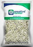 Semillas de flores para la BloomGreen Co. Semillas Gardenâ vertical Alyssum maravillas flor blanca para la jardinería - 1 paquete