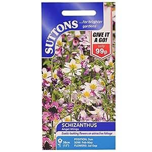 Suttons Seeds 131319 Samen, für Gefiederte Spaltblume