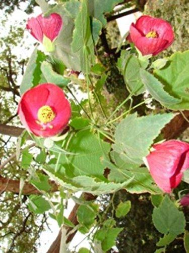 Living Poetry: Flower Essence Haikus by [Hicks Balgobin, Sheila]