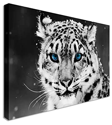 Snow Leopard Blue Eyes Waiting Canvas Prints Wall Art