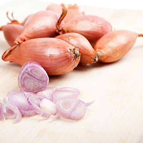 Semi di scalogno - Allium cepa
