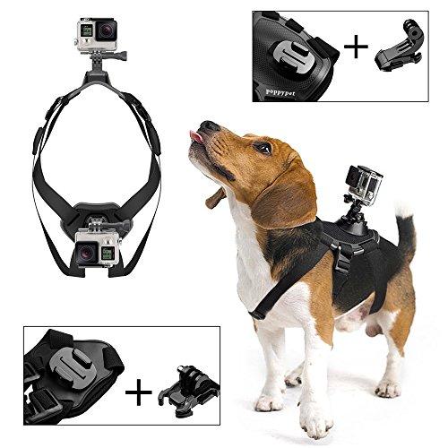 Harnais GoPro pour chien