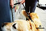 Elastische Flexi Hundeleine mit Clip zum Befestigen – 2 Handgriffe – Neoprene Schlaufe – Ruckdämpfer – Joggingleine – Fahrradleine – Bungee Leine – mit Reflektoren – Sicherheitstraining – Nylon – schwarz – PETLOVERZ - 3