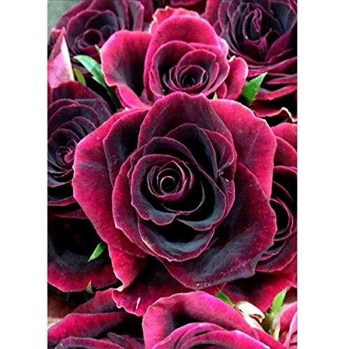 5D Diamant Malerei Kit FULL Bohrer Blooming Roses DIY Strass Stickerei Kreuzstich Arts Craft für Home Wand-Decor 30x 40cm (Kunststoff-canvas-muster Set)