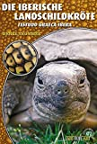 Die Iberische Landschildkröte: Testudo graeca ibera (Art für Art / Terraristik)