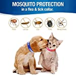 pet dogs and cats flea &tick collar with natural botanical essence for controlling remedy repelling flea egg, mosquito,lice with high-efficiency for large/medium/small dogs and cats (small dog) Pet Dogs and Cats Flea &Tick Collar with Natural Botanical Essence for Controlling Remedy Repelling Flea Egg, Mosquito,lice with High-efficiency for Large/Medium/Small Dogs and Cats (Small Dog) 51lX3FtZlHL