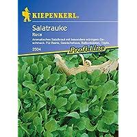 ScoutSeed Kiepenkerl - Salatrauke Ruca 2504 Salatkraut aromático Arugula