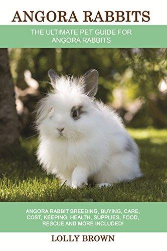 Angora Rabbits: Angora Rabbit Br...